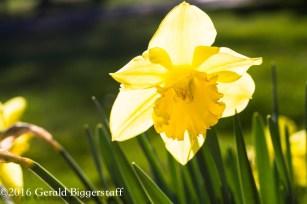 aprilflowers-6