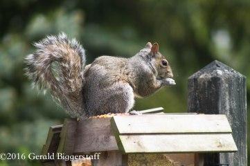 squirreleat-21