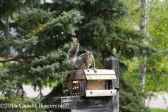 squirreleat-27