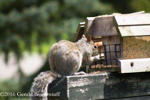squirreleat-31