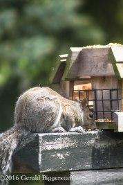 squirreleat-37