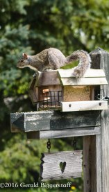 squirreleat-47