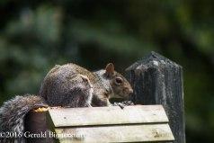 squirreleat-5