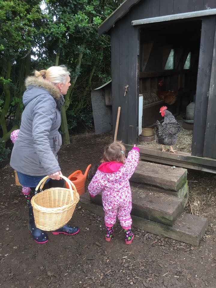 Collecting eggs at the dandelion hideaway, Leicestershire
