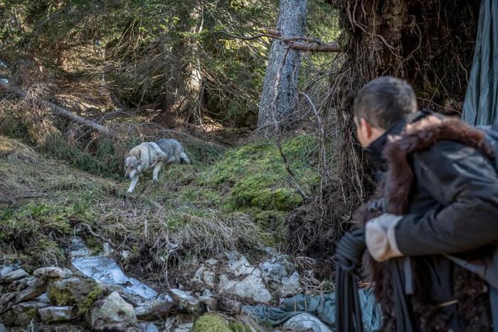 Wolf in Du gegen die Wildnis: Abgestürzt