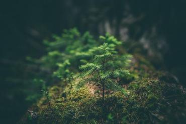 Ein kleiner Tannenbaum im Wald