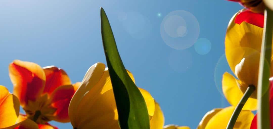 Adult Forum – April Schedule