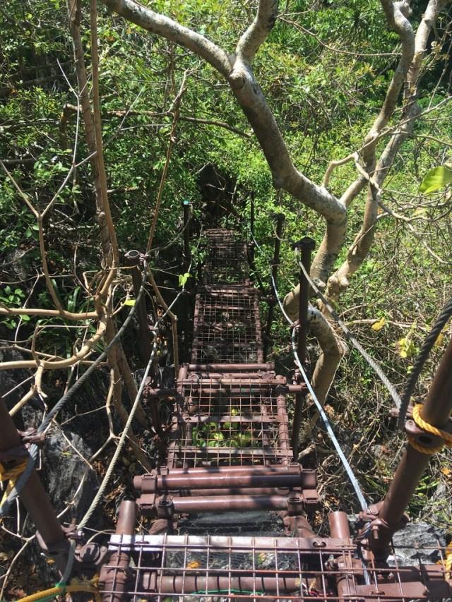 na trasie Canopy Walk