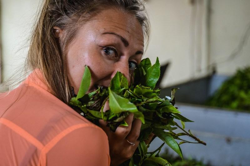 W liściach herbaty