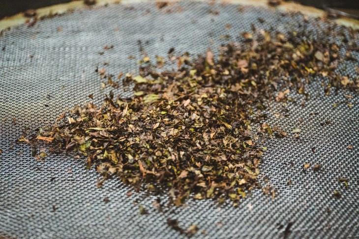 liście herbaty podczas suszenia