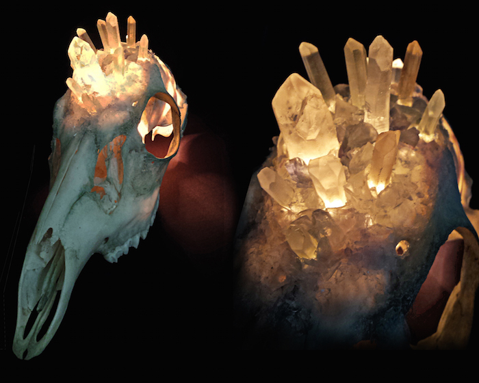Kristin Jarvis Crystalized Taxidermy Deer Lamp