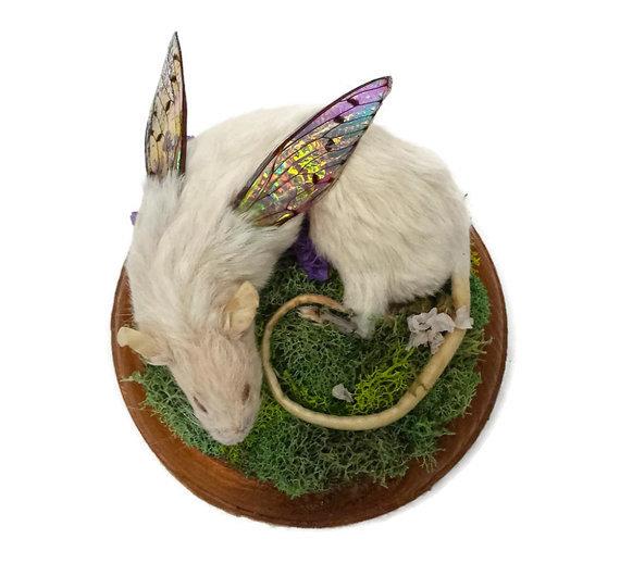 Kristin Jarvis Rat Fairy Taxidermy Art