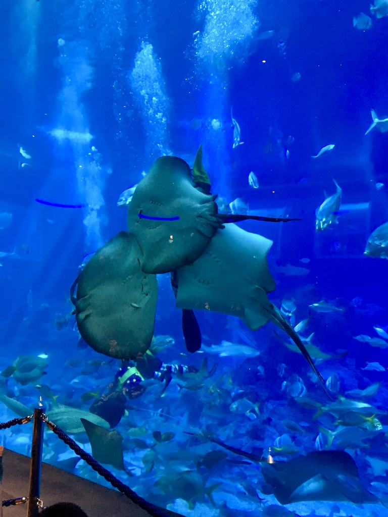 opsicle society-sea aquarium singapore2