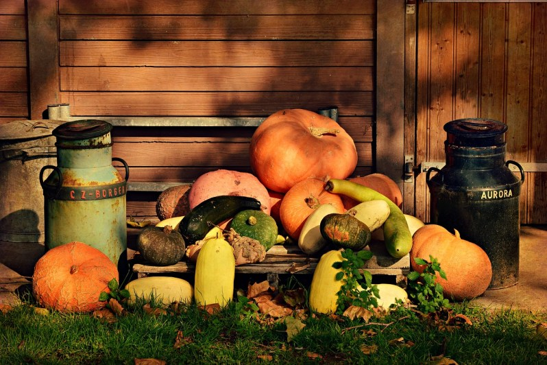 Pumpkins_Popsicle Society
