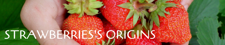 Strawberries origins_Popsicle Society