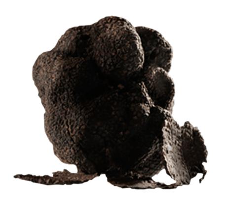 Nero Pregiato Truffle