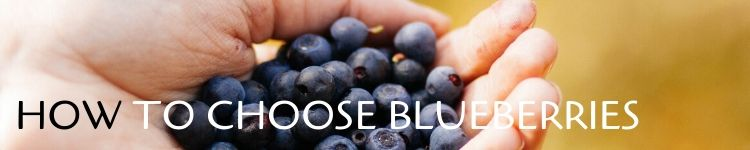Blueberries how to choose_Popsicle Society