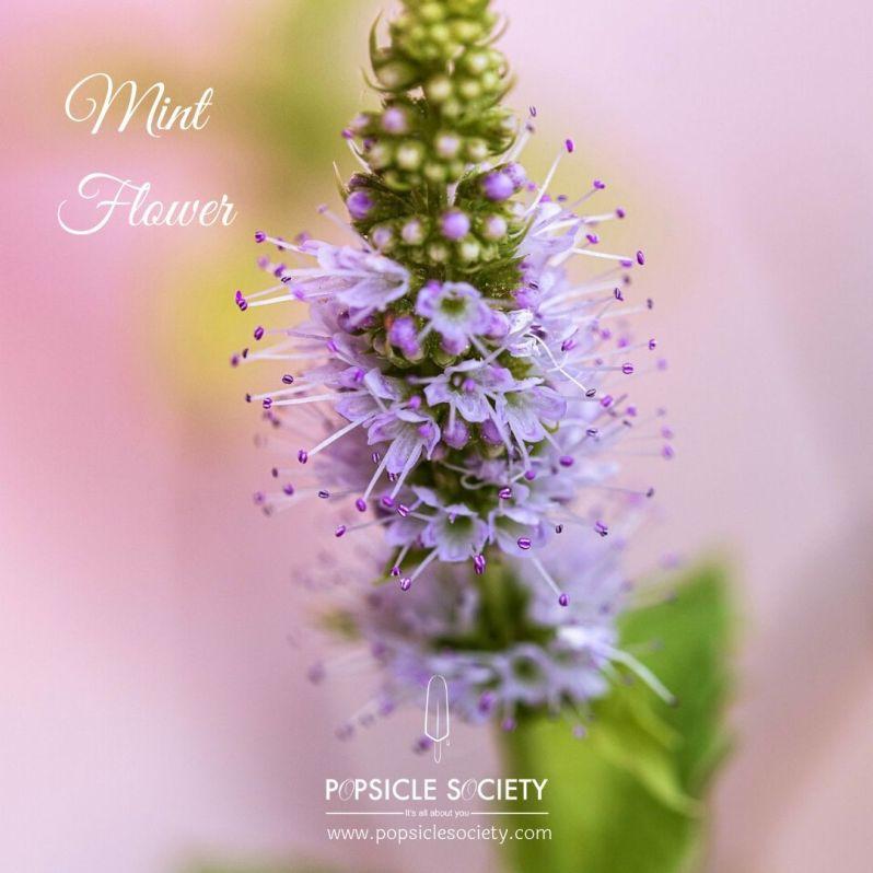 Mint flower_Popsicle Society
