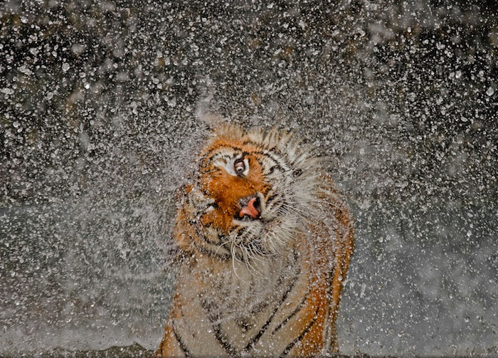 national_geographic_photo_contest_2013_02