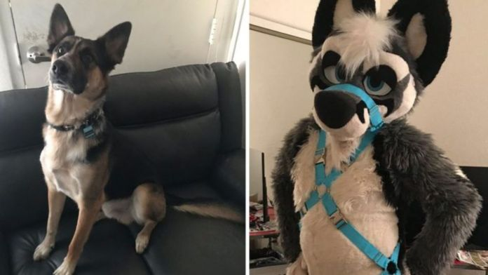 Furry couple Vex and Jax murder a man & skin dog for 'pelt' to make fursuit
