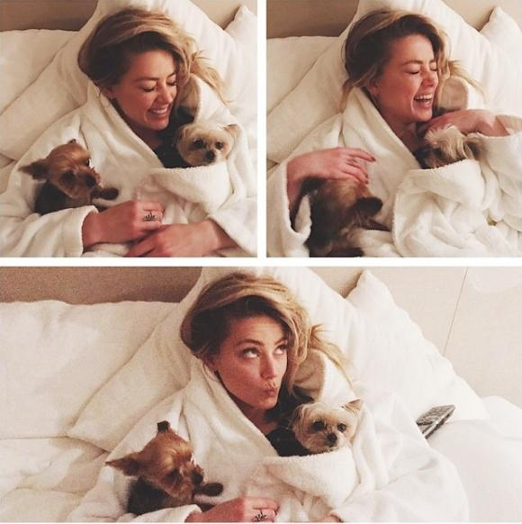 Amber Heard with Yorkshire terriers Pistol and Boo