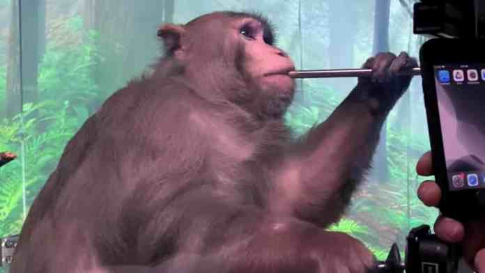 Is the Neuralink Monkey Pong thing real because it is easy to fake.