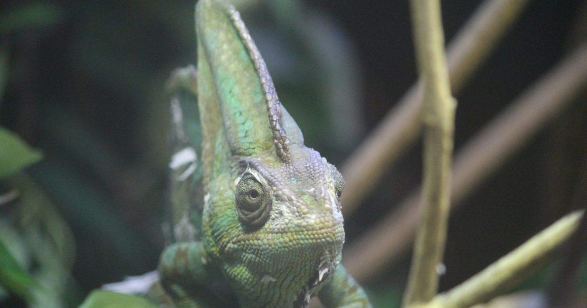 The Sad World of Reptile Obits