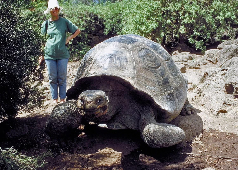 У гигантских черепах обнаружили феноменальную память