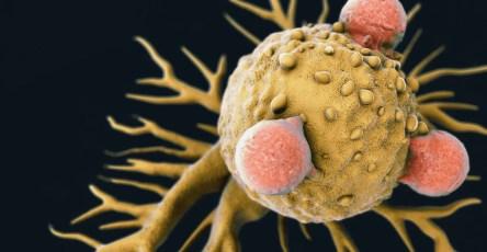 Клетки раковой опухоли оказались разными