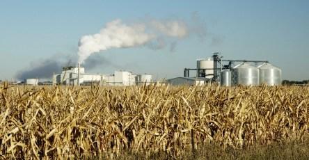 Из биомассы создали водородное топливо