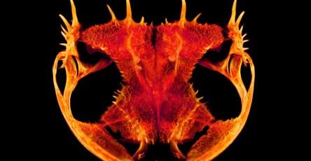 Ученые выяснили, как у лягушек появились такие странные головы