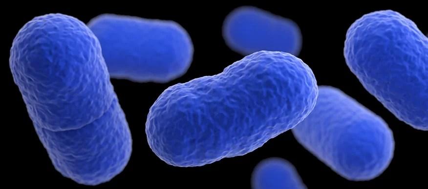 Найдено уязвимое место пищевого патогена