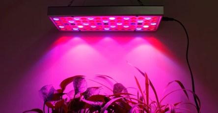 Лампы из нового материала ускорили рост растений