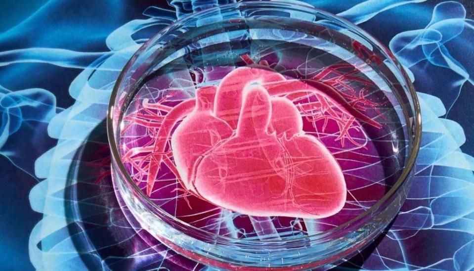 Нет красителям: учëные предложили безопасный способ исследования сердца