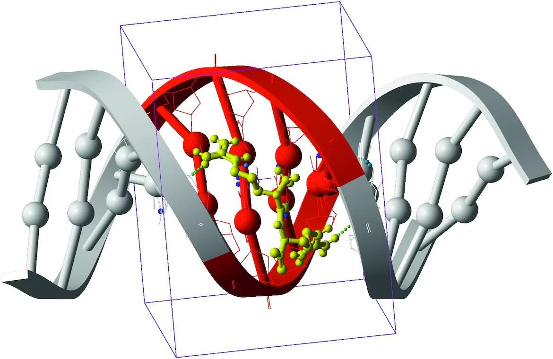 Биологи открыли путь для создания лекарств на основе дипептидов