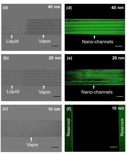 Изображения каналов, полученные с помощью оптической и флуоресцентной микроскопии