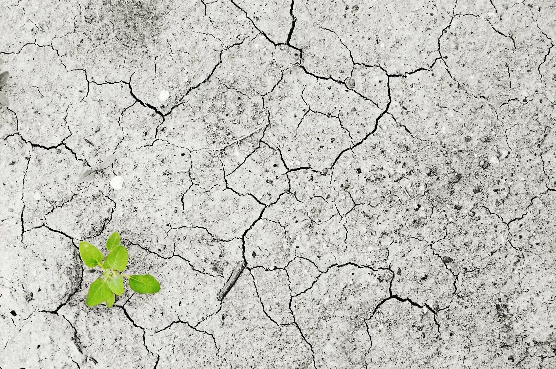 Изменение климата грозит глобальному урожаю в следующие 50 лет