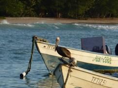 Tobago 2011
