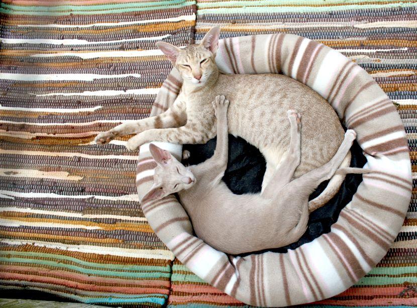Koty w koszyku - miejsce dla kota