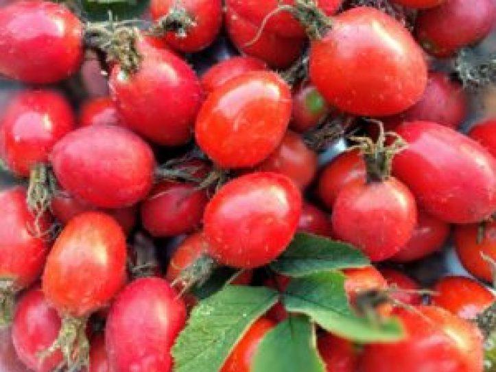 Herbatka z owoców róży - źródło witaminy C