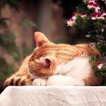 Kot na śpiący na balkonie