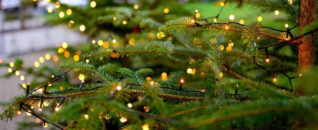 Cięta choinka - naturalny świerk ozdobiony światełkami