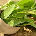 Świeże liście szałwii - sposoby na niestrawność