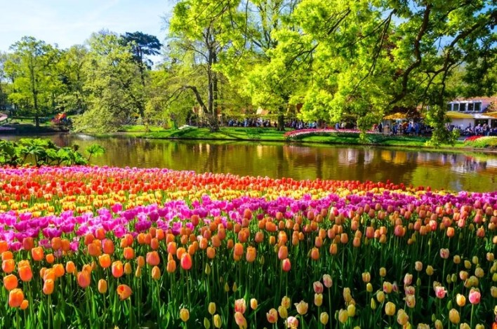 parqu-keukenhof-flores-holanda-amsterdam