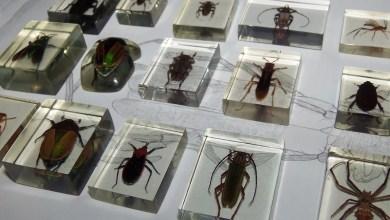 Photo of Incrustação de insetos com resina!