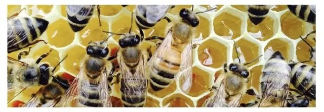 Honeybees storing honey in the broad box
