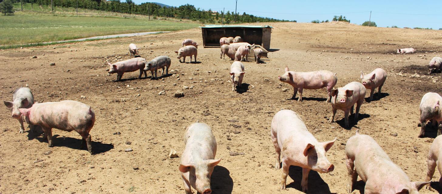 porc-exterieur