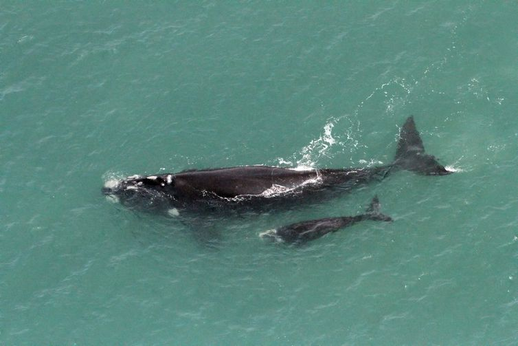 Temporada das Baleias