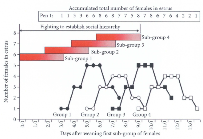 Relationship between the occurrence of fighting and estrus activity when five females per