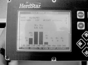 Photo 5. Image of a histogram displaying live weight variation.